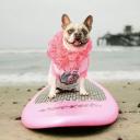 cheriethesurfdog.com Coupons and Promo Codes