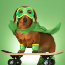 zanypetshop.com Coupons and Promo Codes