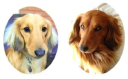 dedicated2dachshunds.com Coupons and Promo Codes