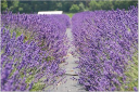 Lavender By The Bay  . Coupons and Promo Codes